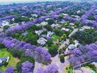 Aerial shot of Johannesburg submitted by Kellie Gardiner to The Daily Examiner's Facebook page as part of our Jacaranda-themed Cover Image of the Week.