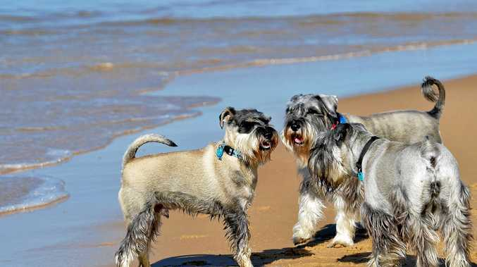 New areas for dogs to play on the beach.