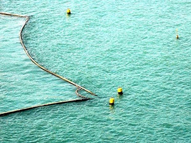Shark meshing nets