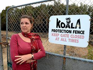 Concerns for koalas after 'horrific' bushfire