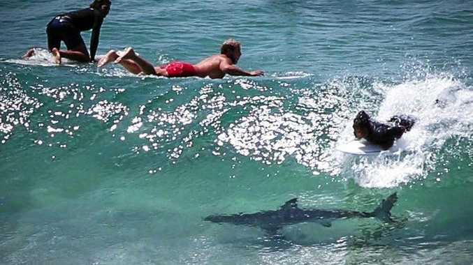 Derik Broshar snapped an image of a shark approaching surfers at The Pass in Byron Bay.  Photo Contributed