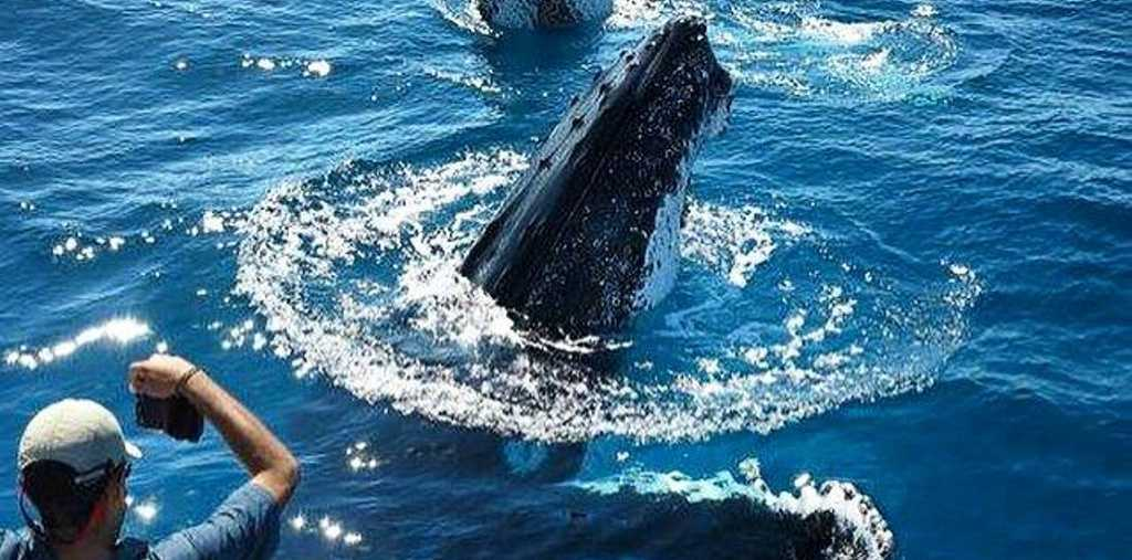 A happy snap from the 2015 whale watching season. Could we see more come through Hervey Bay?