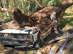 Police confirm man in his 20s killed after tree falls on car