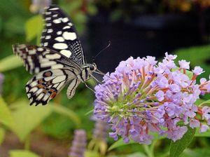 Butterfly blizzard delights Coast community