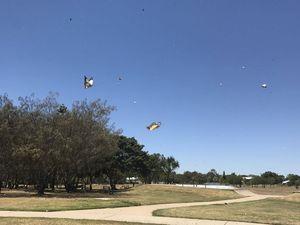 Butterflies fly into Burnett Heads
