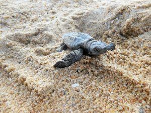Coast group warns 'beware of the turtles'