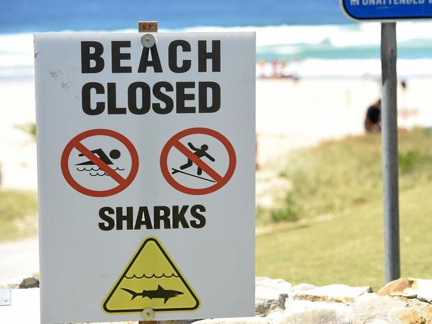 Legislation to introduce shark nets on North Coast beaches will be introduced to parliament this week.