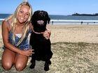 Dog ban at popular Coast beach set to be overturned