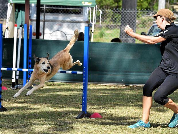 Dog Agility Training Ipswich