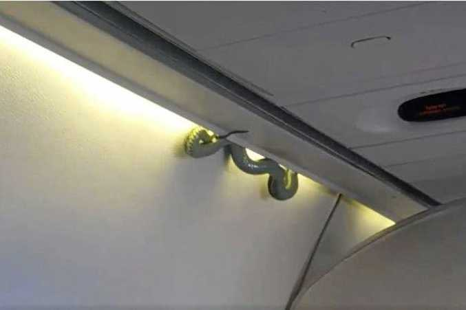 A passenger's picture of the snake that emerged on an Aeromexico flight to Mexico City.