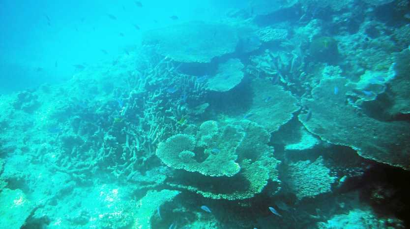 CORAL: The reef will be the talking point at a climate change briefing being held this week.