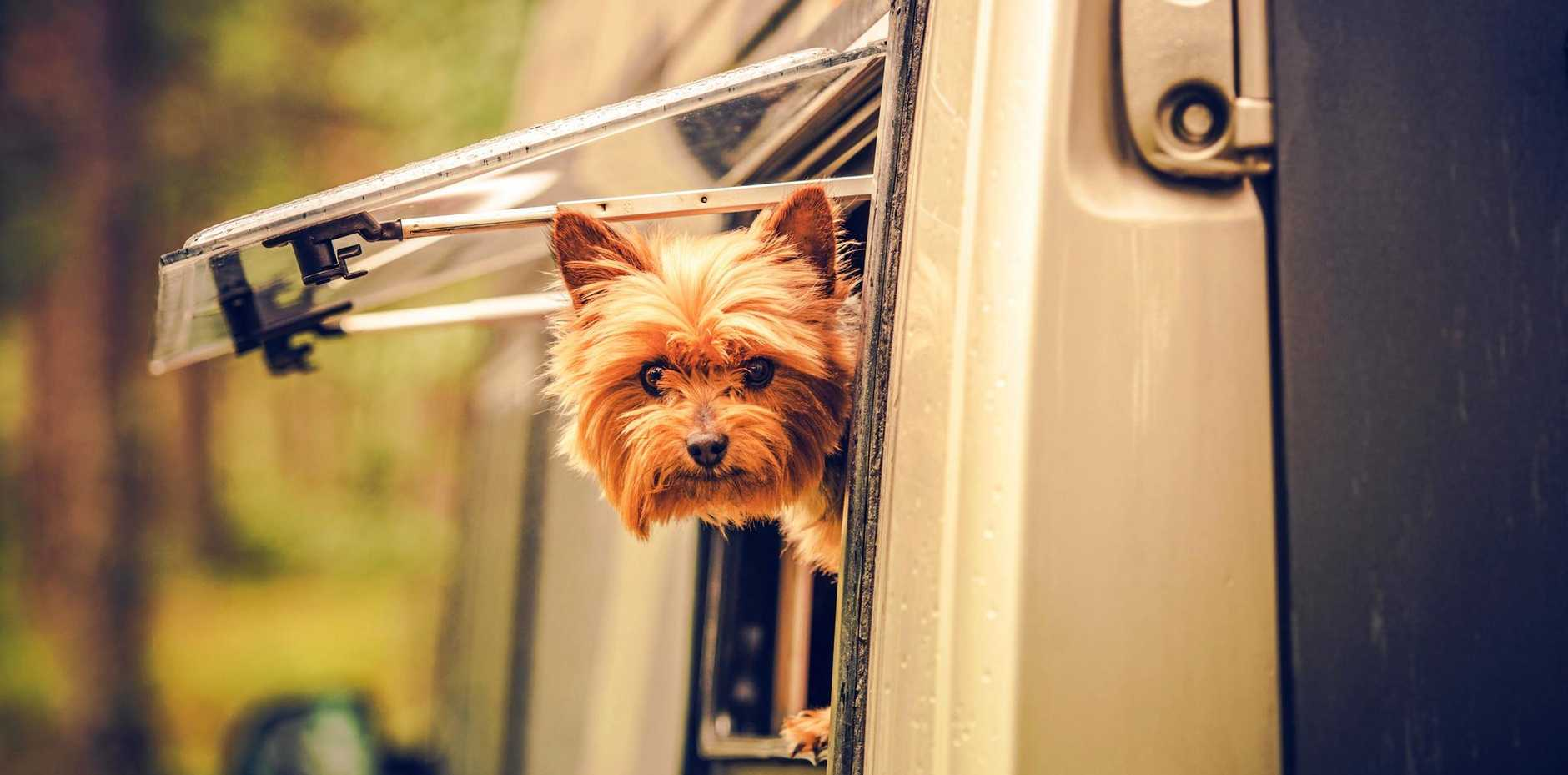 RUFF ROAD: Camps Australia Wide has the low-down on pet-friendly travel.