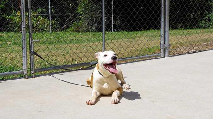 Duke in The Doghouse