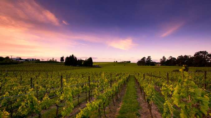 New Zealand is home to 36,192 vineyards, the majority of them for Sauvignon Blanc. Now that's a holiday worth booking on that note alone!