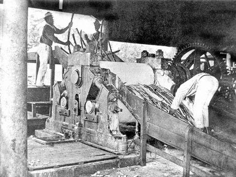 South Sea Islander labourers at Alexandra Mill. c 1868.