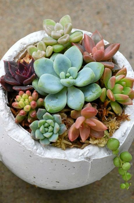Succulents grown by Amanda Meng.