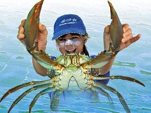 TOTALLY HOOKED: Catching crustaceans lots of fun