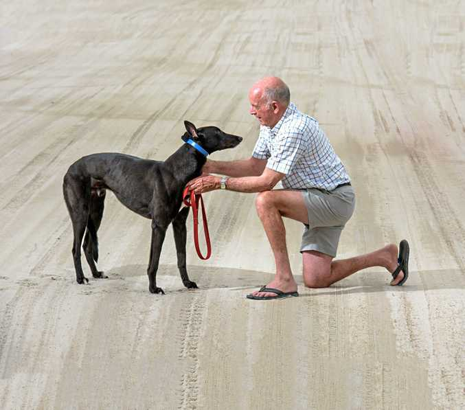 President of Grafton Greyhound Club John Corrigan with his dog Hummin Gun at the racetrack after Premier Mike Baird announced a reversal on his ban of greyhound racing.
