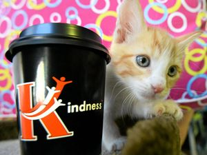 Rocky businesses on board for World Kindness Week