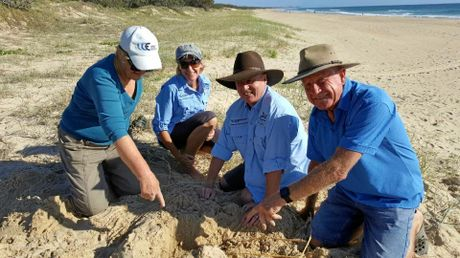 TurtleCare volunteers Myrl, Trish, Wayne and Merv, were excited to find the first turtle nest of the season on the Sunshine Coast.