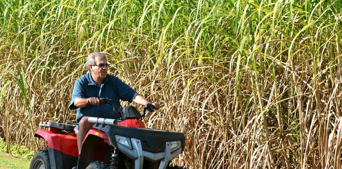 Canegrowers Queensland's chairman Paul Schembri at his property.