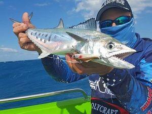 Hot winds bring in mackerel