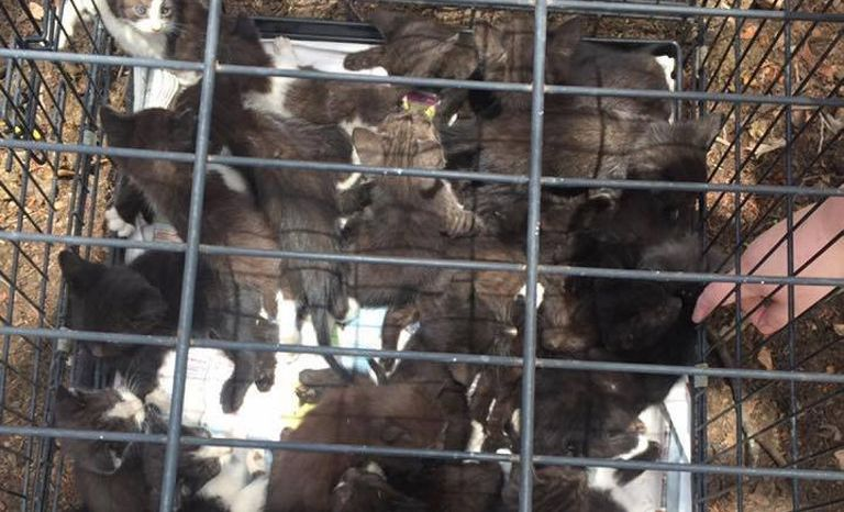 ABANDONED: 51 kittens and cats rescued in a single day by a Fraser Coast volunteer.