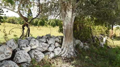 PLANS for a major residential lot subdivision on the North Lismore Plateau could be delayed yet again over claims of an Aboriginal stone wall on the site which one expert says could be thousands of years old.