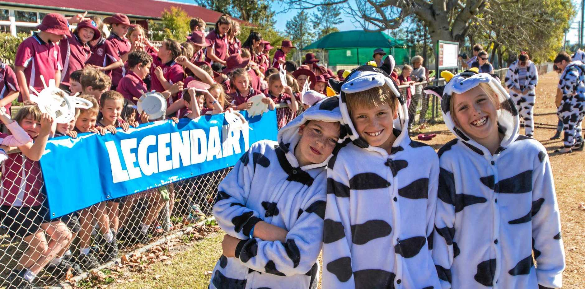 Monto State Primary School Students dressed up as cattle to support the town's bid for Dairy Capital.