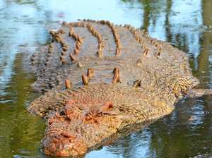 So just how many crocs are lurking in the deep?