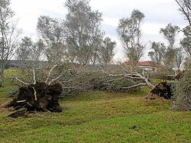 Trees were completely uprooted in the storm that struck Julie Dale's property last Sunday.
