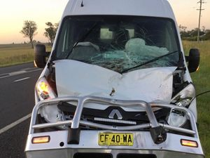 'It came out of nowhere': Man crashes into cow at 100km/h
