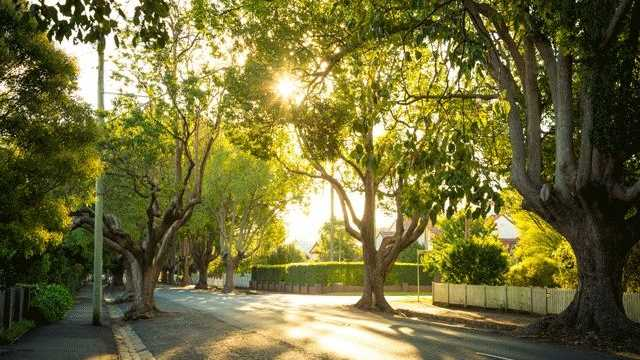Toowoomba is known as the Garden City, but that image is increasingly under threat according to environmental groups.