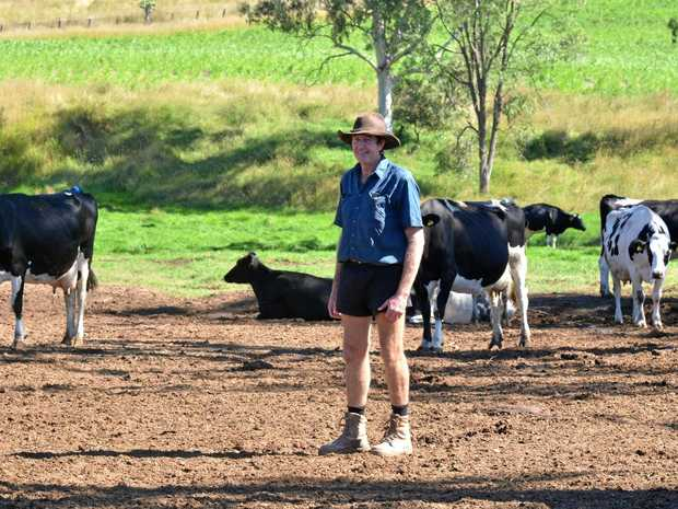 MILK WAR: Maidenwell's Willy Brazier says dollar milk is impacting badly on farmers, despite what big business claims.