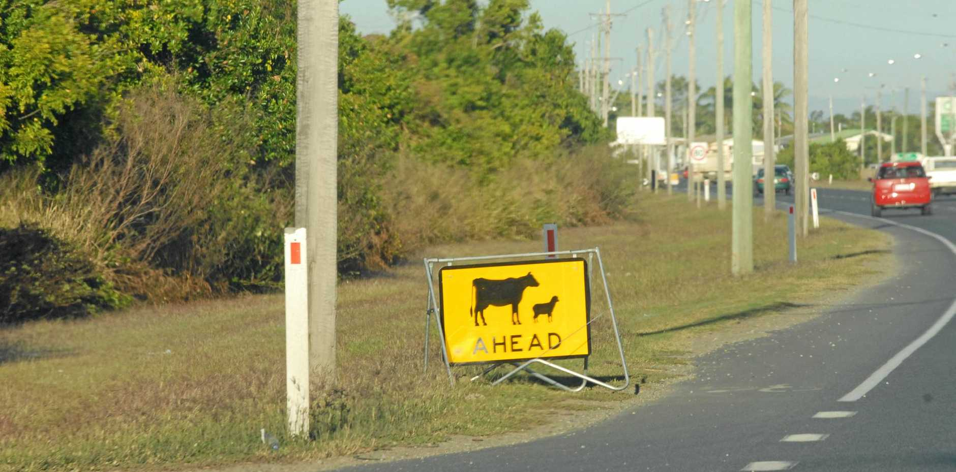 Richmond Valley Council is calling for the NSW roads department to consider cow hazards, safety, traffic and trade in its plans for Summerland Way.
