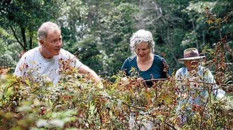 Wild harvesting native raspberries at Cape Byron Distillery (left to right): Jim McEwan; Pam Brook; Martin Brook.