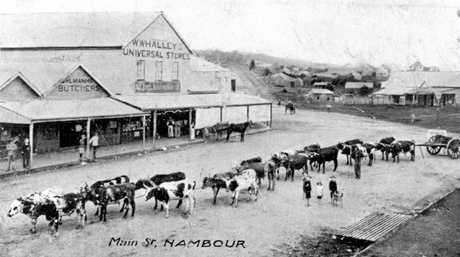 Bullock team in front of William Whalley's Store at the northern end of Currie Street, Nambour, ca 1909.