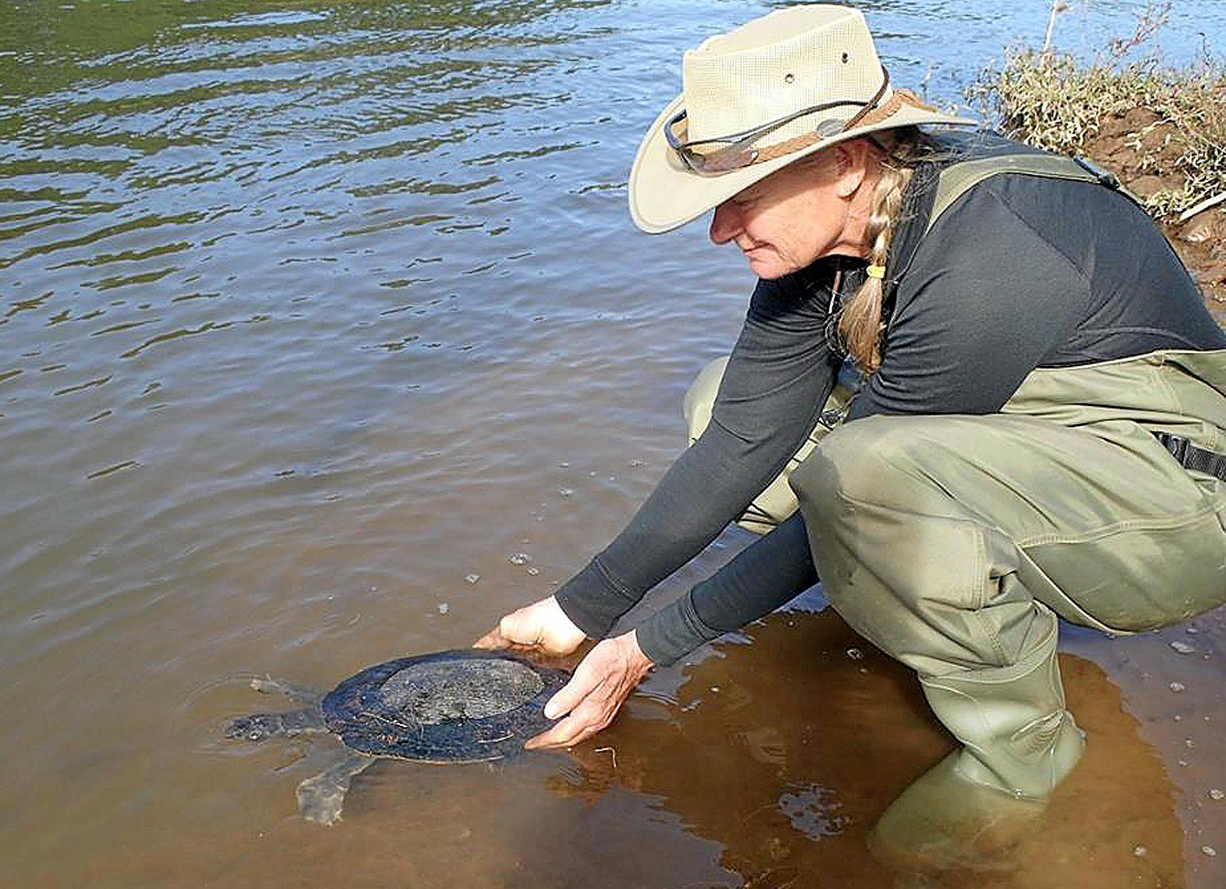 WATER: Glenda Pickersgill and Mary River turtle.