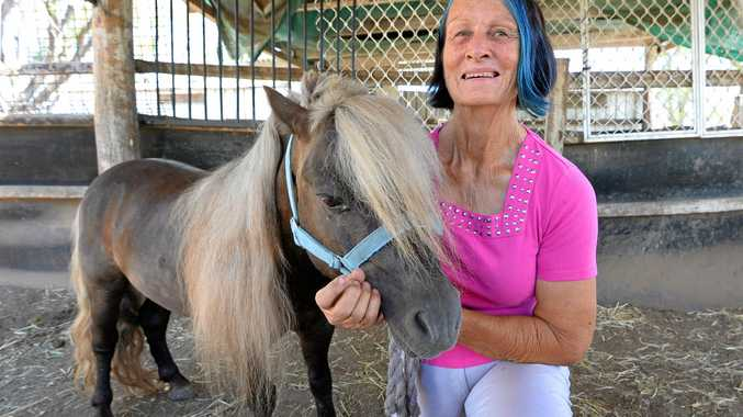 Julie Armstrong with her miniature pony Bandit who was attacked by dogs on Thursday.