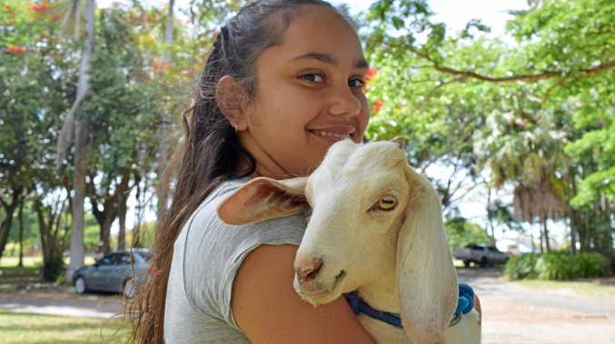 Lakeda Darby-Kupke, 12, with her three-month-old goat, Flower, at the Santa Paws walk on Sunday.