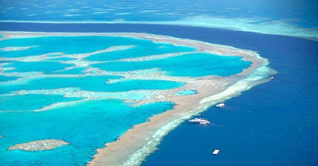 REEF CASH: The LNP has promised $300,000 for the Citizens of the Great Barrier Reef initiative if elected.