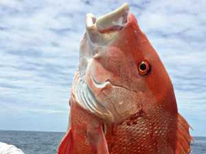 Coral reef fin fish are off limits