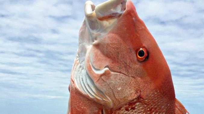 NO TAKE: Coral reef fin fish will be off limits from this Saturday November 26.