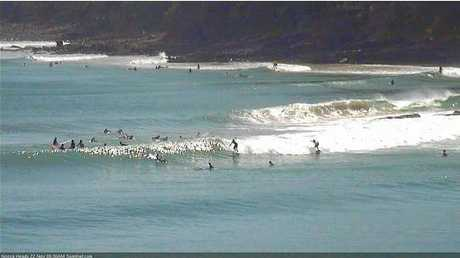 There were some nice waves on the points at Noosa early this morning.