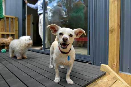 Dogs lap up luxury at five star pet resort sunshine for Five star dog resort