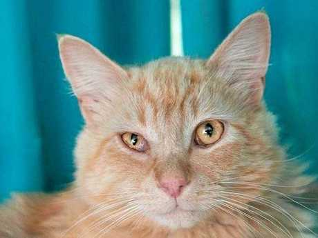 Soquilichi Rescue Ranch is looking for food, funding and new homes for animals like Prince Harry, a one year old domestic long hair.