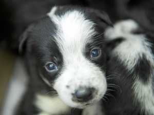 Puppies dumped and left to die