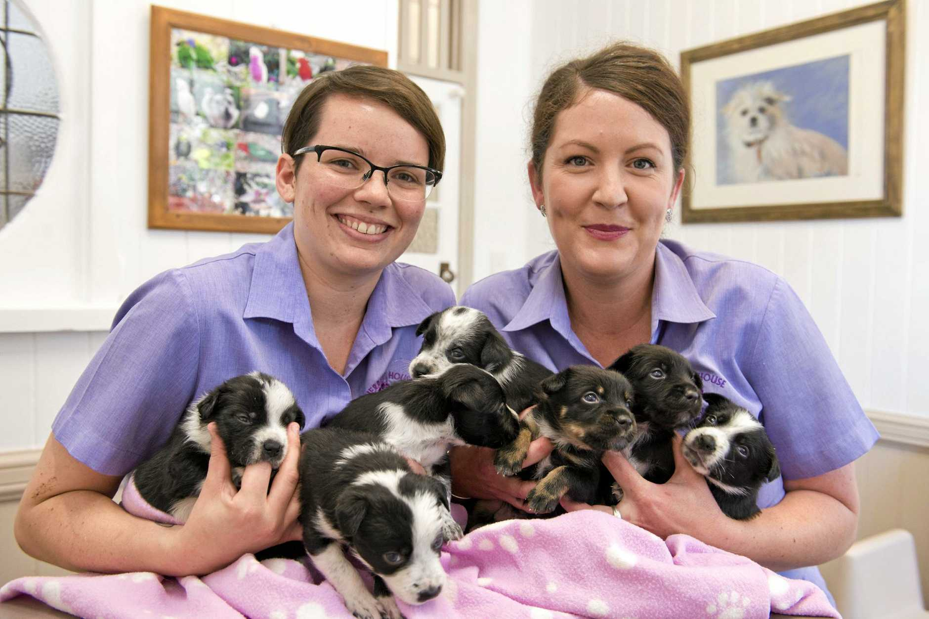 LIVES SAVED: Herriot House veterinary nurses Alex Baker (left) and Hannah McNeill with seven puppies found dumped in Jondaryan.