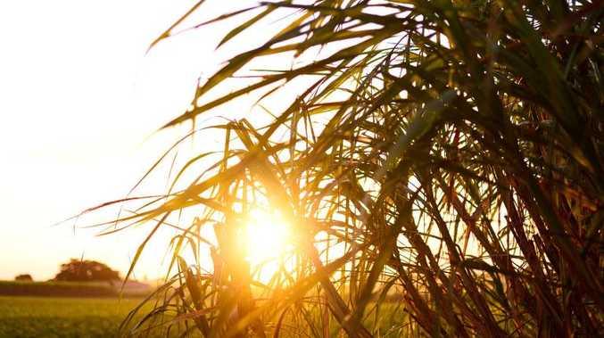 Explore Bundaberg and discover the beautiful region.
