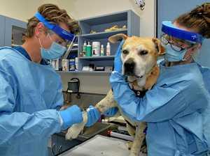 Newborn pup feels the love of award-winning Coast vets